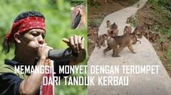 Detim Manik Memanggil Monyet dengan Terompet dari Tanduk Kerbau