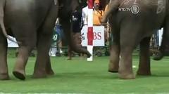Gajah Bermain Polo Untuk Amal di Thailand