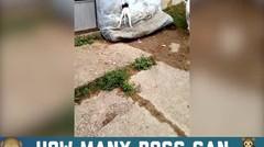 Anjing Ini Terjebak Di Kasur,Menggemaskan