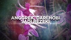 BERANI BERUBAH: Anggrek, dari Hobi Jadi Rezeki