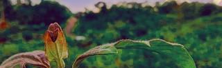 Zeni oktaria