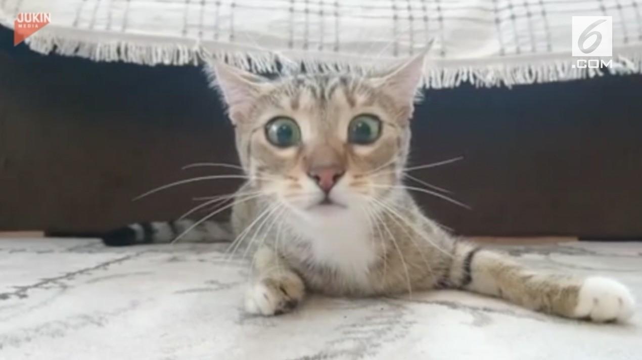 Download 93+  Gambar Kucing Merokok Imut Gratis