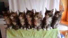 Anak-anak Kucing Mendengar Lagu Favorit Mereka, dan Mereka Mulai Menari, Begitu Menggemaskan!