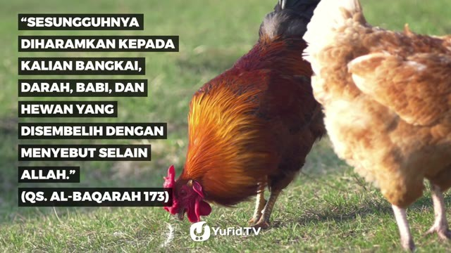 Syarat Penyembelihan yang HALAL - Poster Dakwah Yufid TV ...