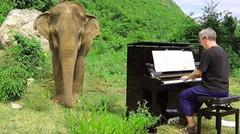 Gajah Buta Berhenti di Jalan Ketika Seorang Laki-Laki Bermain Piano, Kemudian Perilakunya Berubah