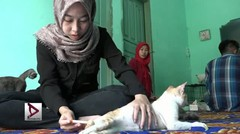 Hero for Cats, penyelamat kucing terlantar