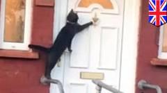 Kucing ini bisa ketuk pintu! - TomoNews