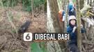 Panik, Pendaki Gunung Dibegal Babi Hutan Hingga Panjat Pohon