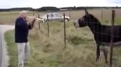 Inilah Aksi Keledai Jika Mendengar Terompet