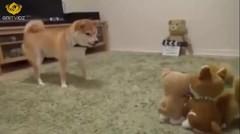 Anjing vs Boneka Lucu