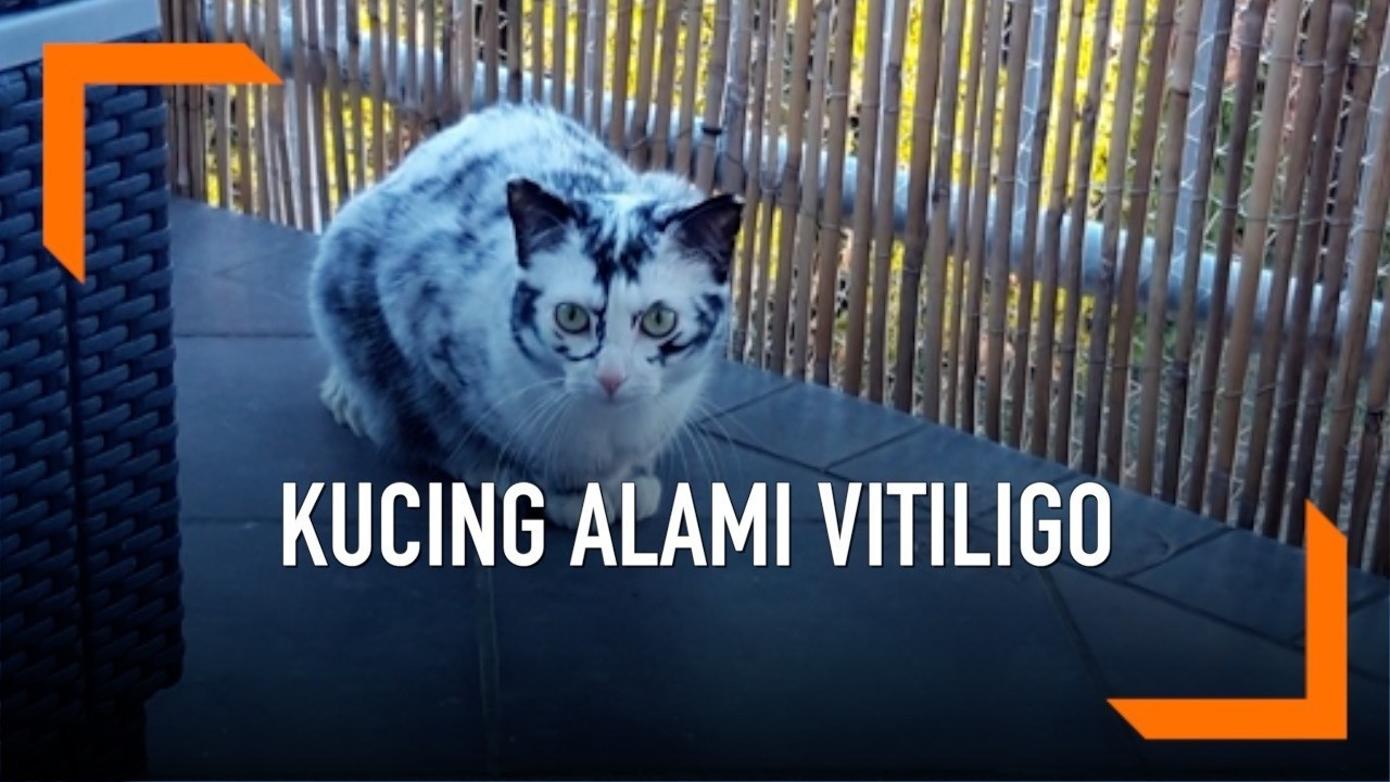 Download 89+  Gambar Kucing Lucu Minta Maaf Paling Bagus HD