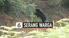 Beruang Masuk Desa, Serang 4 Warga
