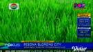 Pesona Blorong City, Tempat Wisata Baru Di Semarang