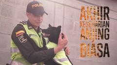 Penjaga Anjing Pareira