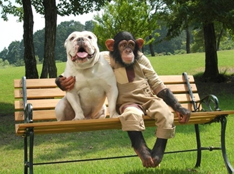 Shio anjing dan Monyet