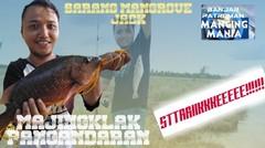 Mancing Mania Majingklak-strikee Mangrove jack (Kakap Merah)