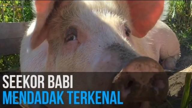 Foto Babi Di Potong Streaming Batal Dipotong Babi Ini Jadi Seniman Vidio Com