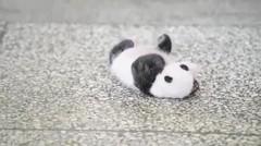 Lihatlah bayi panda super lucu ini menjadi viral di china dalam beberapa jam saja
