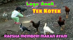 Lagu anak Tek Kotek Kotek (Anak Ayam) Baby Raesha ngasih makan ayam & Belajar menyayangi Binatang