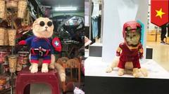 Menyambut Avengers: Endgame, kucing ini bergaya seperti Avengers- TomoNews